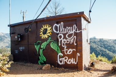 Always room to grow. Foto: Kyle Glenn via Unsplash
